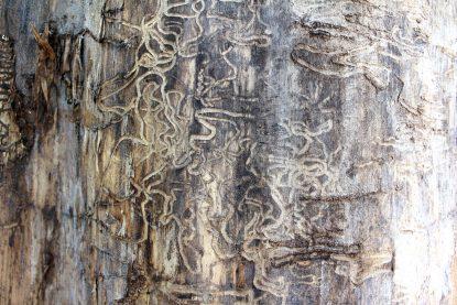 etat du bois apres passage termites insectes xylphages