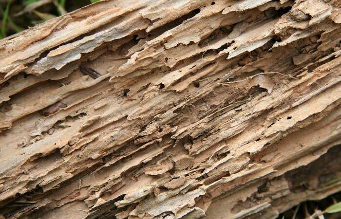 termites-bois-traitement